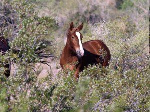 Horse Quotes and Sayings: I believe, ... - Horseback Riding ...