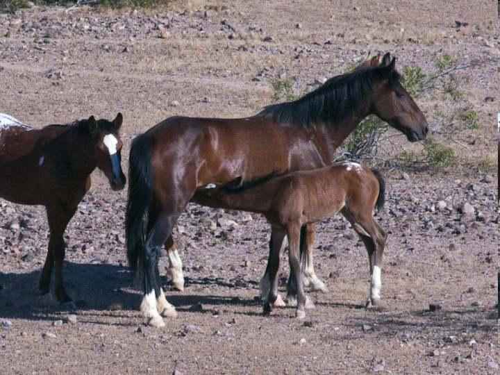 The Mustang American Symbol Of Liberty Horseback Riding Worldwide